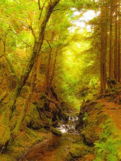 Puck's Glen: Land of the Faries, Benmore Gardens, Scotland by Bathsheba 1