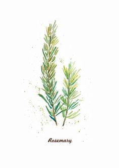 Wonder if I could paint this myself.might be worth a try. Set of 6 Herb Prints. inch Art Print from my от ThePaperWing Herbs Illustration, Botanical Illustration, Watercolor Leaves, Watercolor Paintings, Watercolor Food, Watercolors, Botanical Drawings, Botanical Prints, Nature Tattoos