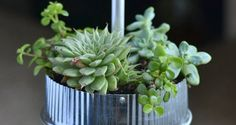 Cute housewarming gift idea! How to Make The Best Tabletop Succulent Garden Ever | Homesessive.com