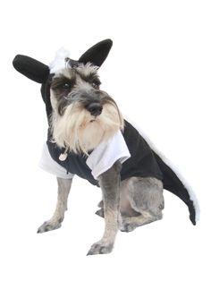 Disfraces divertidos para tu #Perro #Halloween.