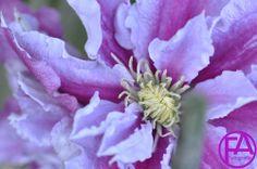Makro-Blüte | FeenArt | Claudia Böttcher | DSC_6102FAFGk