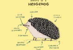 Anatomy of a Hedgehog  Artwork