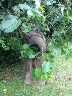 There is just something about baby elephants, they are just one of the cutest things ever
