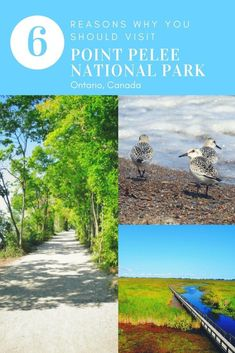 It's home to the southerly most tip of Canada and it's one of the most unique parks in Ontario. Here are 6 Reasons to Visit Point Pelee National Park. Alberta Canada, Quebec, Canadian Travel, Canadian Rockies, Travel Inspiration, Travel Ideas, Travel Tips, Travel Stuff, Travel Goals