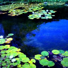 Blue Lily Pad Pool: Photo by Rebecca Stees: Taken with an iphone with the toy camera app at the Norton Simon Museum