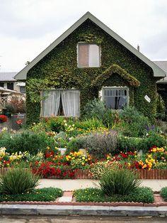 Edible Landscaping: Ornamental & Edible Flowers & Herbs Front Entry Garden | jardin d'herbes aromatiques