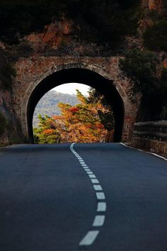 Trees on a Fall Road / Tunnel