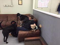 come sit anywhere at #Dingosdoggydaycare #dingosdogsitting #dogsitting #dogs #playtime #dogdaycare