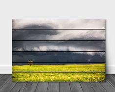 Pallet Wall Art, Metal Wall Art, Storm Photography, Landscape Photography, Lone Tree, Wall Art Pictures, Wood Pallets, Nebraska, Framed Prints