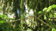Sieniawka #57   Muchołówka szara / Spotted flycatcher Bird Feeders, Wordpress, Outdoor Decor, Animals, Fotografia, Animales, Animaux, Animal, Animais