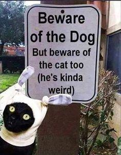VERY weird