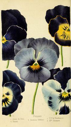 ser. 3:t.1 (1847) - Revue horticole. - Biodiversity Heritage Library