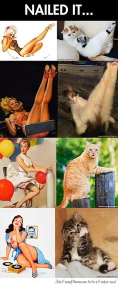 Cats that look like pin-up girls...