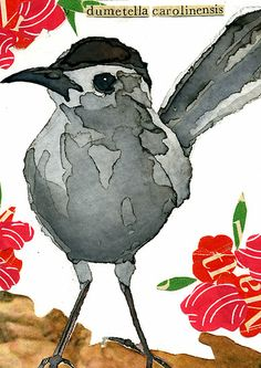 Dumetella carolinensis (Gray Catbird) by Carol Kroll    Media: Watercolor and vintage collage
