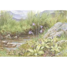 Sundew and Butterwort by Margaret Winifred Tarrant She was the only child of Percy Tarrant, the landscape painter. She studied at Clapham School of Art and at Heatherley's School of Art. From 1921 she worked largely for the Medici Society, painting children's pictures, flowers and views of the Surrey countryside where she lived.