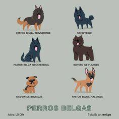 Perros Belgas.