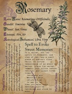 Printable Herb Profiles, Book of Shadows Pages, Herb Correspondences, Grimoire Pages, Plant Meanings