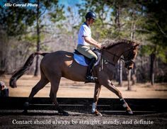 The most important role of equestrian clothing is for security Although horses can be trained they can be unforeseeable when provoked. Riders are susceptible while riding and handling horses, espec… Equestrian Quotes, Equestrian Outfits, Equestrian Problems, Trail Riding, Horse Riding, George Morris, Horse Training Tips, Horse Tips, Dressage Horses
