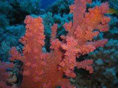 Red Sea; Egypt
