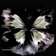 Butter Fly Art  Butterfly Fly Free
