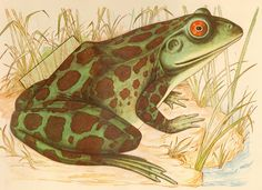 Zoo anatomy from Macrina: frog from outside (via Flickr by agence eureka)