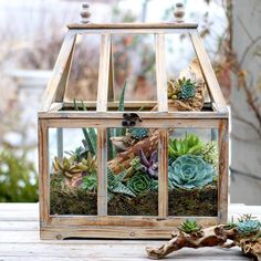 My latest project! #succulent #suckerforsucculents #succulove #succulents #succulentbloc #succucolor #plants #terrarium #success #plantlove #project #diy #loveit #natural #garden #gardens #instagardeners_feature #fun #happythursday #nofilter
