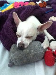 Max Sleeping