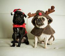 christmas, cute, dog, pug - image #152440 on Favim.com