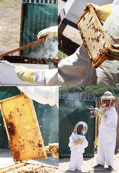 Beekeeping experience at Carmel Valley Ranch