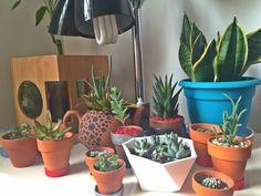Plantas de vários tamanhos
