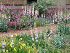 Xeriscape garden filled with penstemon's and other hardy low water plants. Lawn And Landscape, Landscape Services, Landscape Design, Garden Design, Water Wise Landscaping, Landscaping Plants, Xeriscaping, Front Yard Design, Landscape Designs