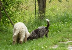 hunting for truffles