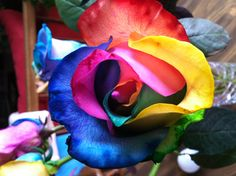 Rainbow Roses  Amazing how the petals are multiple colors...dye injected.