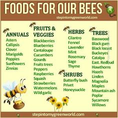 Burnley Farm Apiary is a honey bee farming company that specilizes in honey bees and honey production. We have lots of honey for sale. Bee Hive Kits, Bee Hive Plans, Honey Bee Farming, Honey Bee Garden, Raising Bees, Bee Friendly, Birds And The Bees, Save The Bees, Bees Knees