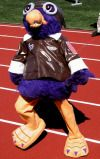 "Meet ""Ace"", the Stonehill Skyhawks mascot.  | Stonehill College"