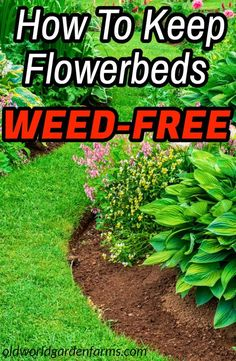 How to keep flower beds weed-free - all summer long!, How to keep flower beds weed-free all summer long ! # Landscaping weed Garden arrangement begins at the en. Garden Yard Ideas, Lawn And Garden, Summer Garden, Winter Garden, Garden Art, Summer Plants, Patio Ideas, Garden Projects, Garden Tools