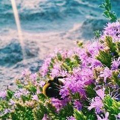 La magia di un dettaglio nello #shotonlumia @melonespaziale  #foto #fiore #gallipoli #insetto #natura #fotografia