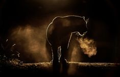 African wildlife photographer Greg du Toit captured this photo last year of a leopard out on night patrol. It& a shot for which everything seemed to come Wildlife Photography, Animal Photography, Night Photography, Photography Business, African Leopard, Gato Grande, Blog Fotografia, Out Of The Dark, Epic Photos