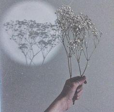 Earth, nature, beauty