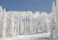 There's obviously a lot of breathtaking white… | 19 Reasons Colorado Is A Wintry Heaven On Earth