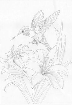 59 Ideas Wood Burning Patterns Stencil Coloring Pages Bird Coloring Pages, Adult Coloring Pages, Coloring Books, Bird Drawings, Animal Drawings, Drawing Sketches, Sketching, Silk Painting, Painting & Drawing