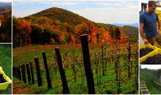 Hail to the Harvest on September 19 at Ankida Ridge | Jefferson Heritage Trail