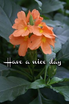 Good Morning Monday Images, Positive Good Morning Quotes, Good Morning Happy Saturday, Good Morning Beautiful Flowers, Good Morning Beautiful Images, Good Morning Gif, Good Morning Picture, Good Morning Friends, Good Thoughts Quotes