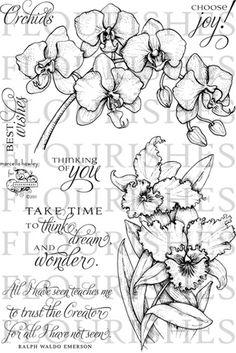 http://shop.flourishes.org/Orchids_p/ss150.htm#