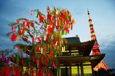 増上寺の七夕2013