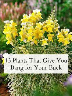 10 LowMaintenance Perennials Perennials Yards and Gardens