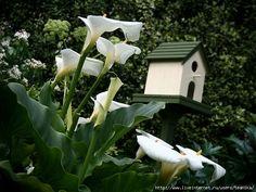 Чудесный сад / Wonderful garde. Обсуждение на LiveInternet - Российский Сервис Онлайн-Дневников