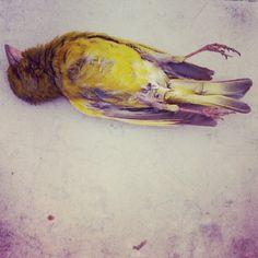 Dead birds don't sing.