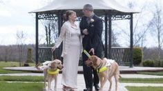 Due ciechi si conoscono e si sposano grazie ai loro cani guida innamorati