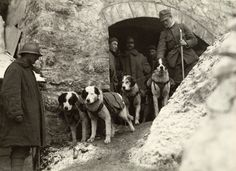 The animals that served in the first world war – in pictures